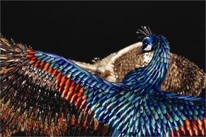 nail-tip-skulpture-peacock2
